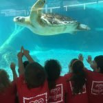 Lily School Visits Save Our Seabirds